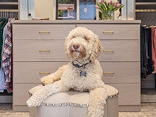 Shaggy dog of California Closets client Davis Ligon sits in front of custom light tan drawers