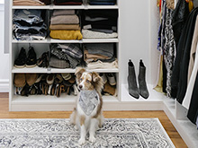 Dog sits in organized closet by California Closets