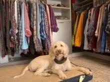 Davis Ligon Client Story - California Closets Cincinnati, 2018