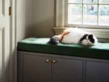 Cat Resting on Green Cushion on California Closets Storage Solution